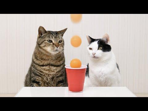 Cats and Ping Pong Trick Shots Video