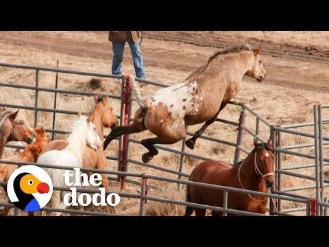 Wild Horse Immediately Recognizes His Girlfriend After Years Apart #Video