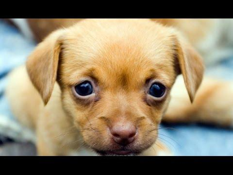 Cute Puppies Compilation