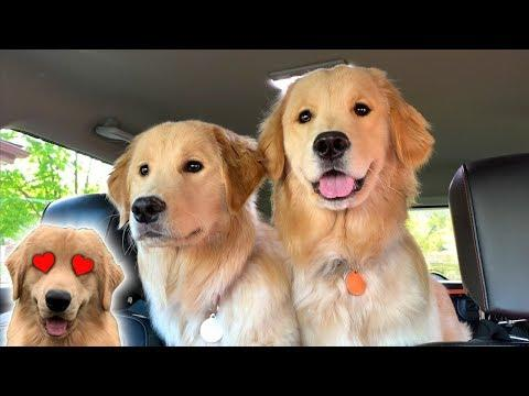 Surprising My Dog With His Girlfriends