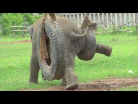 Baby Elephant : Revenge Of The Tire