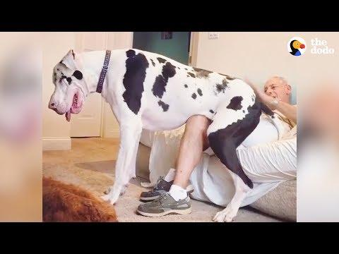 5 Reasons Why Big Dogs Are The Best