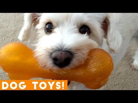 Funniest Dogs and Their Favorite Toys EVER   Funny Pet Videos