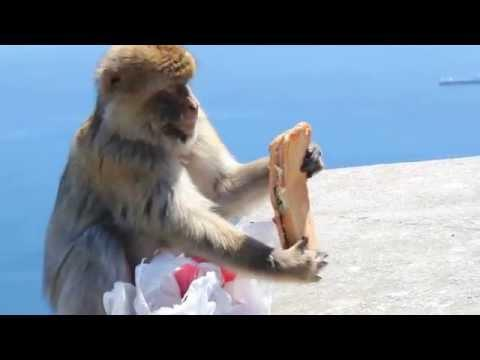 Monkey Stole And Then ATE My Sandwich!