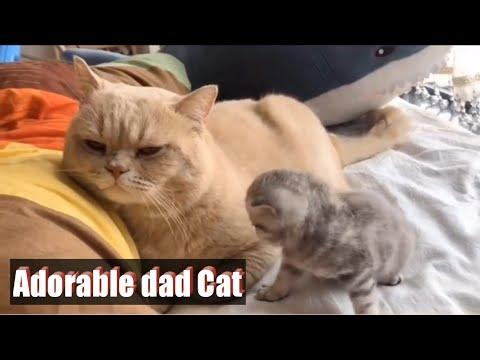 Most Adorable Dad Cat Ever Video