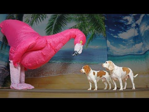 Dog vs Giant Flamingo Prank: Funny Dogs Maymo & Potpie