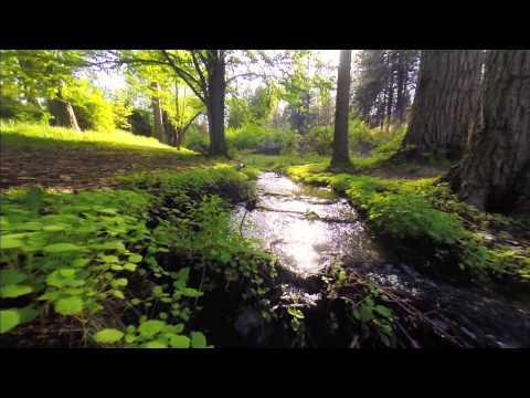 Nature Walk Along A Stream Meditate And Relfect On Life