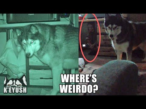 Hiding From My Dog In The DARK video! He Can't Find Me!