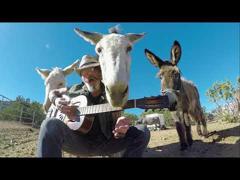 Hazel the famous donkey gets jealous video