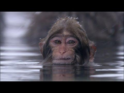 The Animal Kingdom Shares Their Favourite #BBCMoments