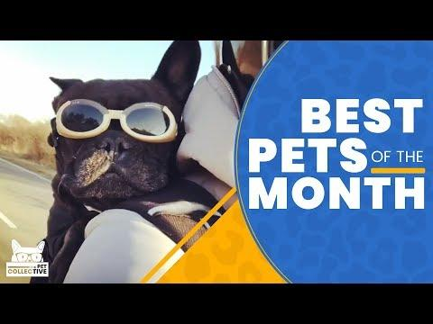 Best Pets Of The Month || March 2019