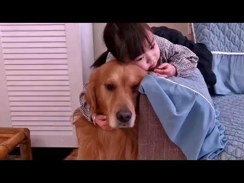 Golden Retriever Loves Little Human Sister Video