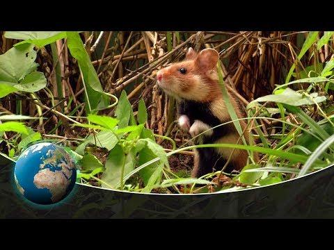 Animals building skills #Video