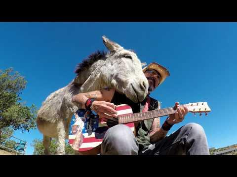 Hazel The Donkey Loves Music #Video