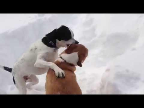 Funny Dogs Playing Chicken In The Snow