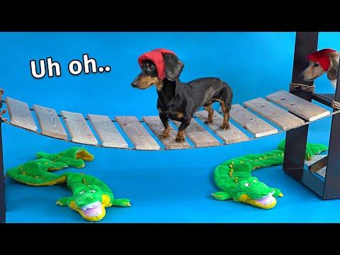 Wiener Dog Obstacle Challenge! [Extended Version Video!]