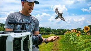 Bird Taking Off at 20,000 fps (213 milliseconds) - Smarter Every Day 197