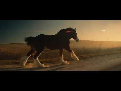 Budweiser Video   Reunited With Buds