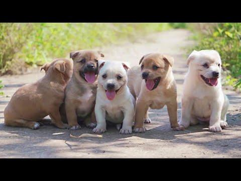 Beauty of Happy Rescued Street Puppies Video