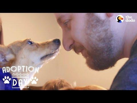 Shy Little Dog Transforms In New Home - MUFFIN | The Dodo Adoption Day