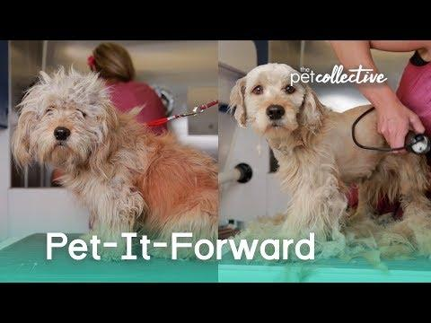 Pet-It-Forward