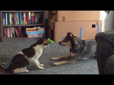 Martial Artists #Video - Cat and Dog Spar !