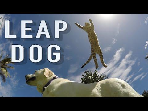 Boomer The Dog-Leaping Cat