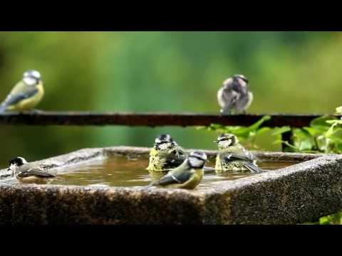 Bedlam in the Bird Bath