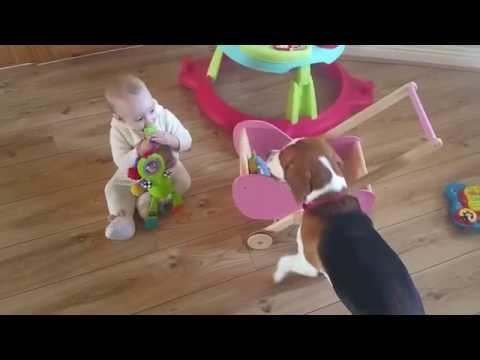 Dog Brings Toys To Little Girls Wooden Pram