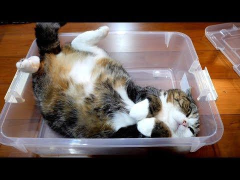 Maru relaxes in the plastic box