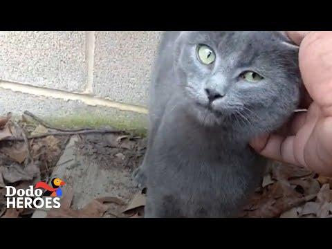 Guy Who Didn't Like Cats Can't Stop Rescuing Them Now Video