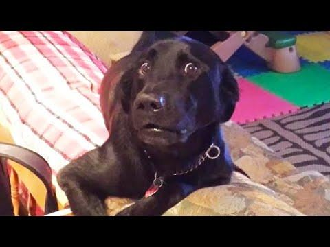 Naughty pets Funniest Videos #3 - Funny Dogs and Cats