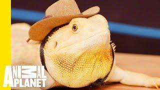 How To Take Care Of Your Reptile