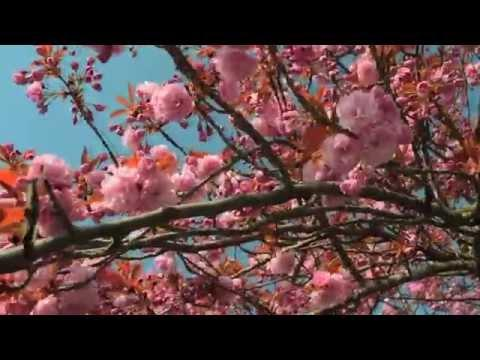 Nature's Blossoms On Easter Morning To Sooth Your Soul