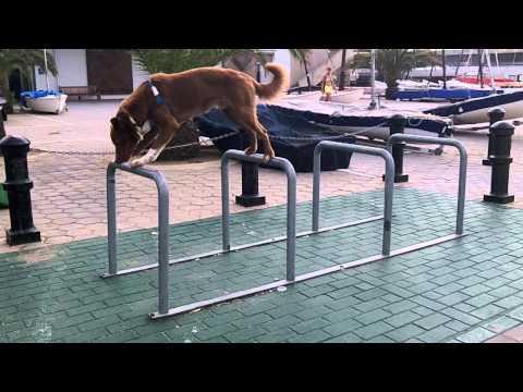 Baby Horse & Dog Play Tag!