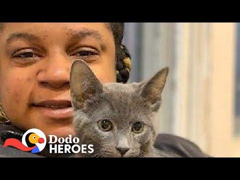 This Woman Has Saved Hundreds Of Thousands Of Cats Video
