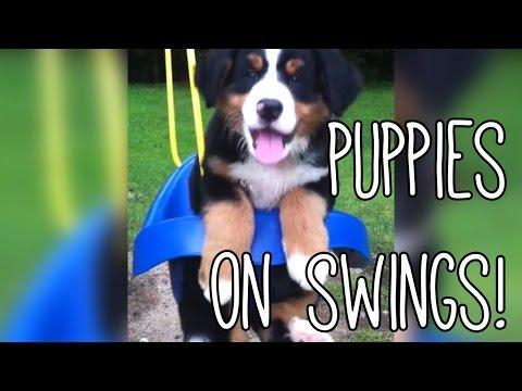 These Cute Dogs Are So Happy On Their Swing Sets!