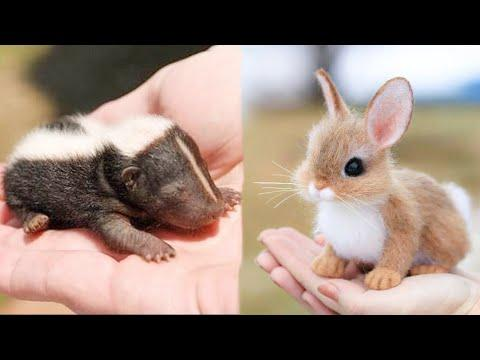 Cutest baby animals Videos Compilation Cute moment of the Animals - Cutest Animals #7