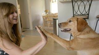 Jessi & Andi, a Mutual Rescue™ Film (English subtitles)