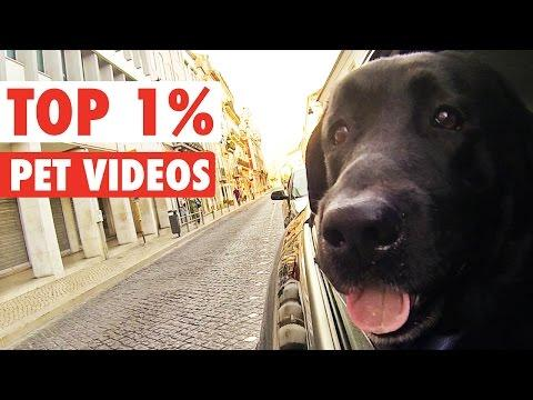 Top 1% || Funny Pet Compilation