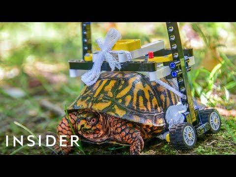 Maryland Zoo Made A LEGO Wheelchair For An Injured Turtle