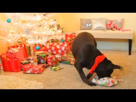 DOGS OPEN CHRISTMAS GIFTS!!