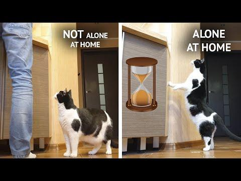 The smell of meat. How will the cat behave in 2 situations? #Video