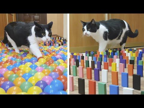 Color Obstacle for the cat Challenge Video
