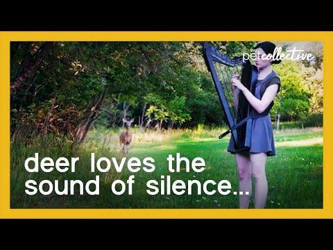 Girl Attracts Deer While Playing Harp in the Woods Video