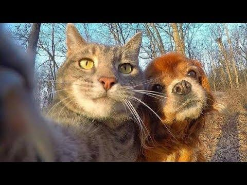 Weirdest Relationship between Cats and Dogs Compilation