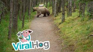 Hiking With Bears || ViralHog