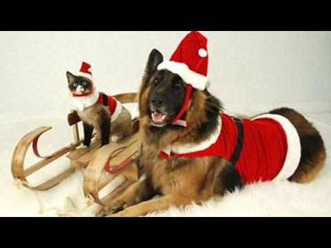 20 Festive Furry Friends Celebrating The Holidays