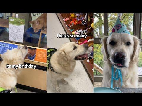 Dog Picks Out His Present For His Birthday. Video.