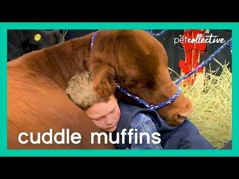 Cuddle Muffins | The Pet Collective